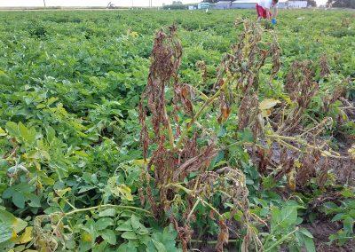2017-08-10 plant flagging