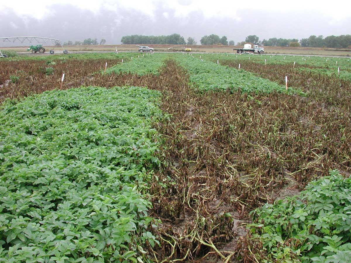Fungicide-comparison