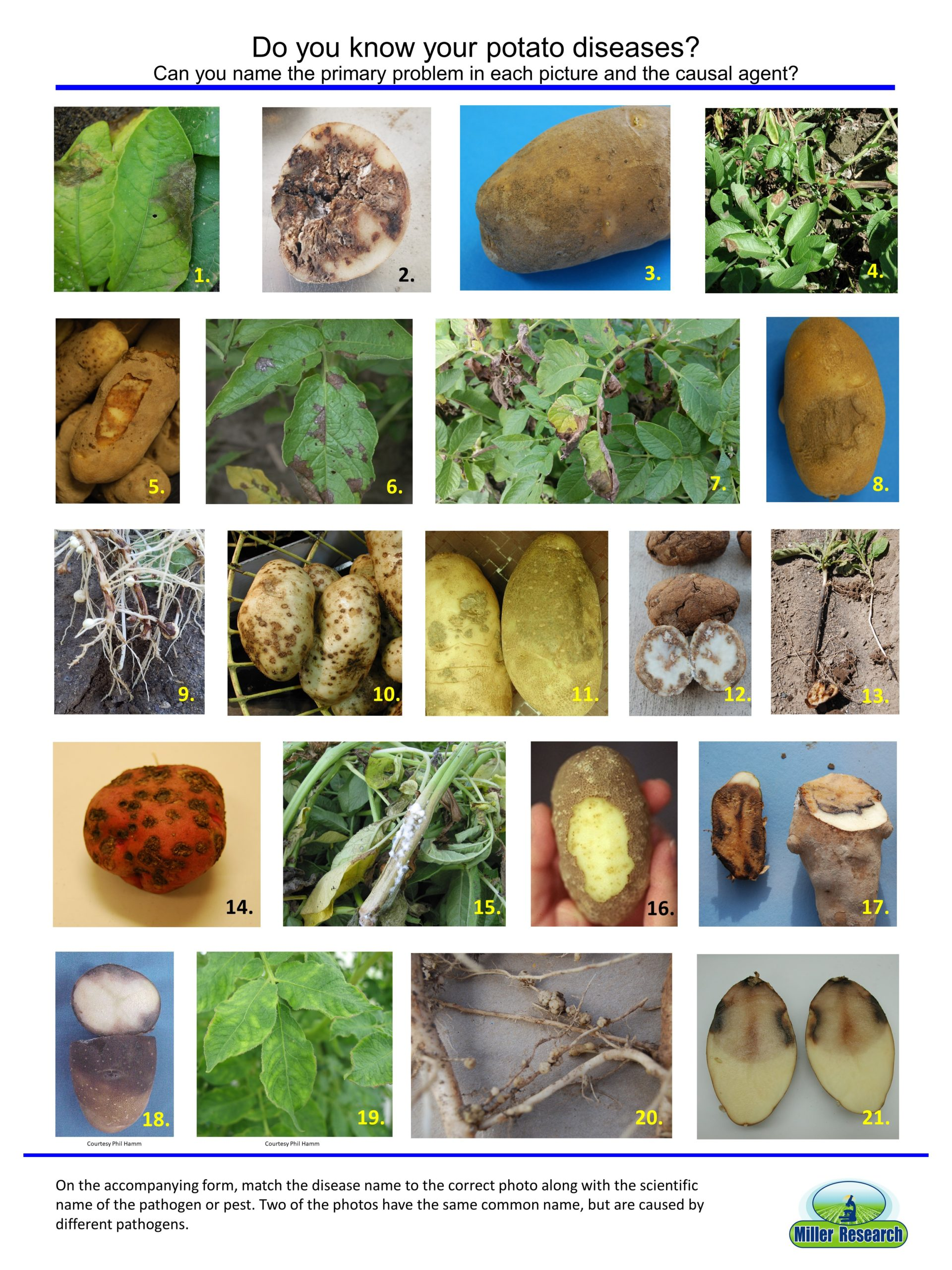 Potato Disease Quiz